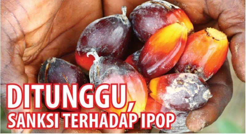 Upaya pemerintah membatalkan perjanjian Indonesia Palm Oil Pledge (IPOP) yang diteken enam raksasa perkebunan sawit nasional mendapat peluru baru. Komisi Pengawas Persaingan Usaha (KPPU) memutuskan menyelidiki dugaan pelanggaran kesepakatan IPOP.…