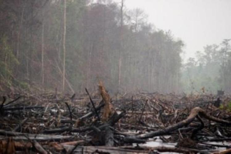 Masa depan 531 perusahaan kehutanan dan perkebunan menghadapi ketidakjelasan menyusul pemetaan Kawasan Hidrologis Gambut (KHG) yang dilakukan Badan Restorasi Gambut (BRG). Pasalnya, BRG menetapkan konsesi perusahaan tersebut masuk ke dalam…