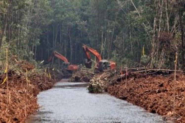 Selain Gapki, respons terhadap kebijakan Kementerian Lingkungan Hidup dan Kehutanan untuk melakukan penilaian Proper di lahan gambut juga datang dari pelaku pengusahaan hutan. Lewat Asosiasi Pengusaha Hutan Indonesia (APHI), sejumlah…