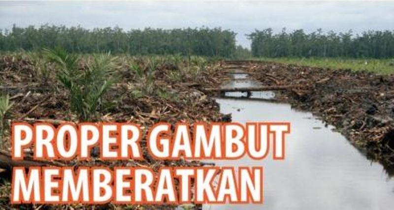 Bisnis perkebunan kelapa sawit dan hutan tanaman industri, dua primadona penghasil devisa, terus mendapat tantangan berat. Setelah rongrongan kampanye negatif pihak asing, kini giliran aturan baru pemerintah bisa jadi hambatan.…