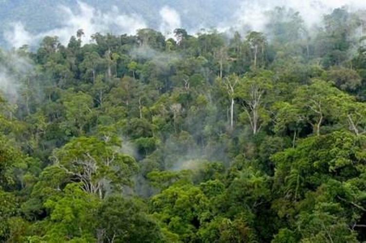 Gagasan untuk bisa membebankan hak di kawasan hutan disambut positif pelaku usaha kehutanan. Perwujudan ide revolusioner itu diharapkan bisa menjadikan sektor kehutanan kembali moncer.…