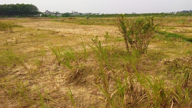 Kondisi lahan tandus di MGC sebelum ditanami pohon